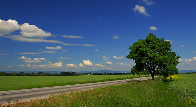 Jarná krajina