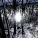 sneh,stromy,slnko