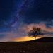 Polnočný dub