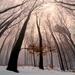V zimných bučinách