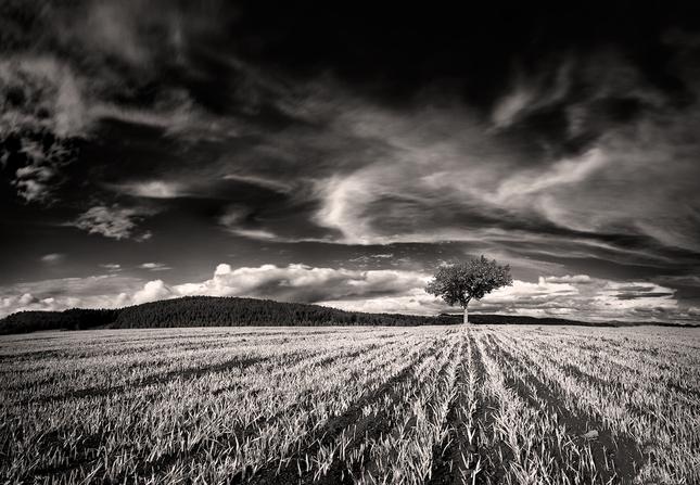 Montanerov strom