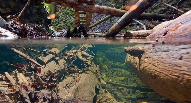 Podvodný svet roklín