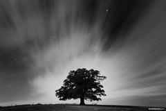 150 oak