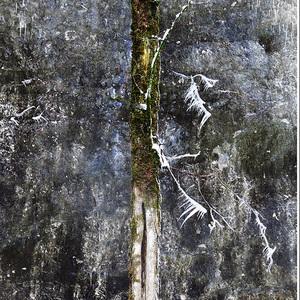 Zubaty strom