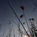 jarná tráva