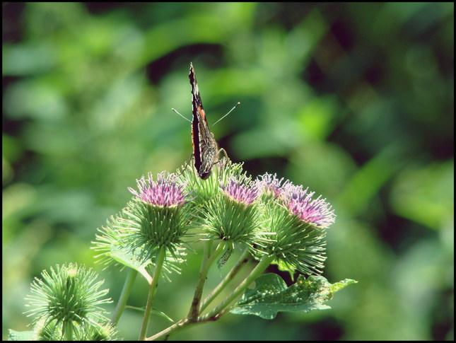 motýlik ;)