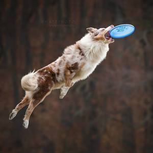 Frisbee mania