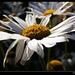 Květinka na sklonku života