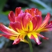 Zase kvetina :-)