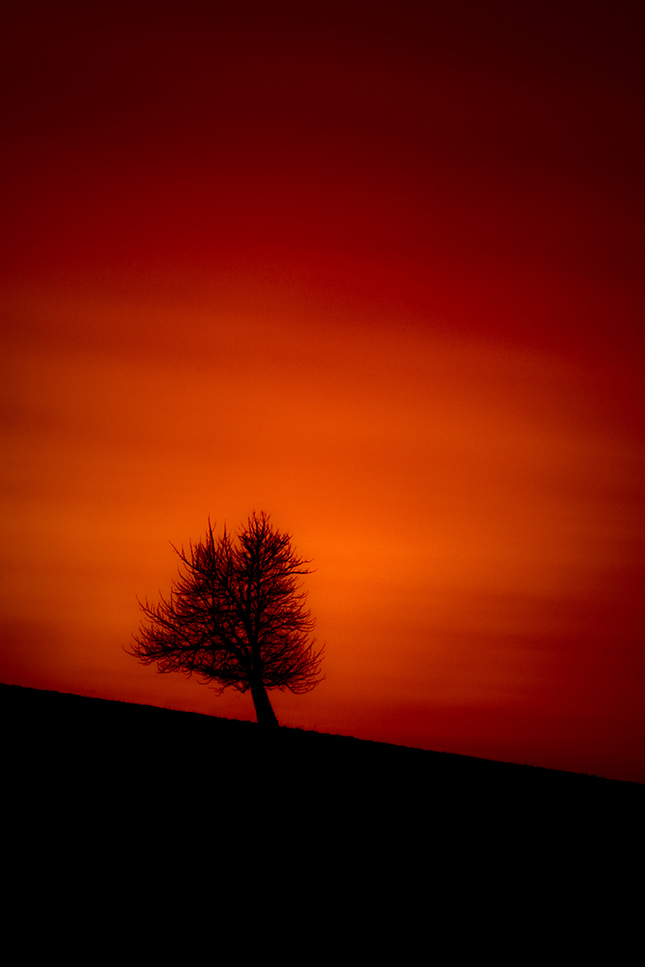 Tree after sunset.