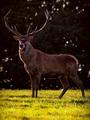 ... Kráľ lesa ...