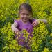 v zajatí žltej