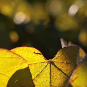 Jesennéžilkovanie