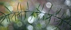 Asparágovoblúk