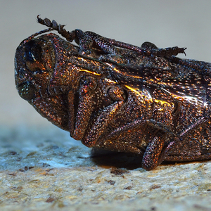 Hranamŕtvehochrobáka