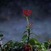 Ostrov Euphorbia