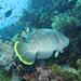 Podmorská fotografia
