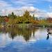 volavka na jazere