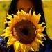 Slečna slnečnica