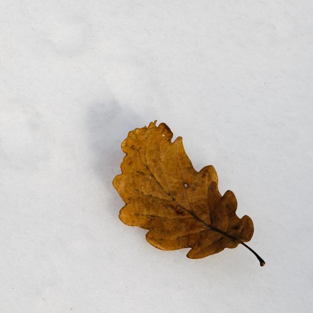 Tvár zimy