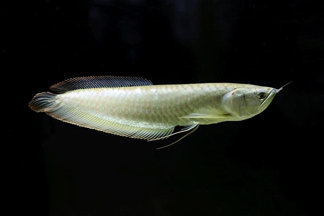 ticho pod vodou