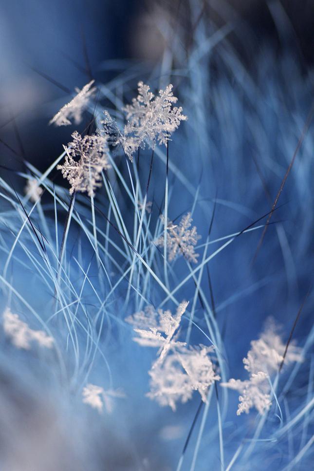 zo zimnej záhrady