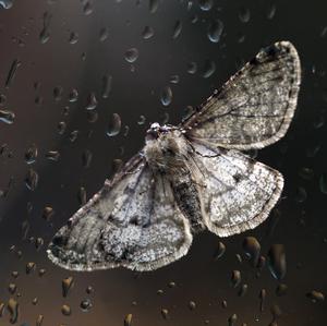 februárový motýľ