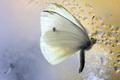 v motýľom raji