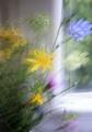 maľované okno