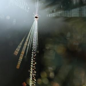 v zajatí svetla