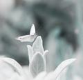 o snoch s motýľom