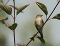 posedenie s vtáčikom