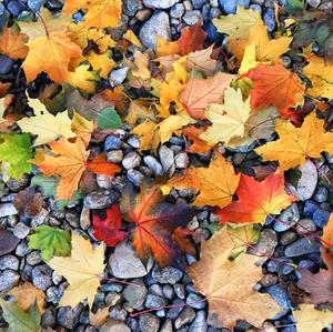 jesenná tapeta
