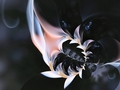 ohnivé kvety