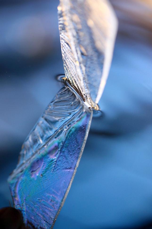 svetlo v krídlach