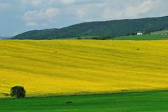 Žlto-zelená