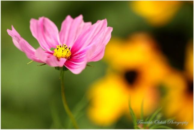 Kvitnúce šťastie...