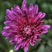 Kvet v HDR