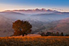 Strom - kopce - Tatry
