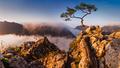 Zo skaly strom rastol
