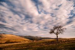 Na kraji kopca strom stojí