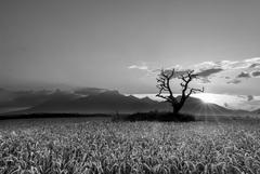 večerná stromovka BW