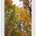 obraz jeseňe