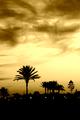 palmový večer
