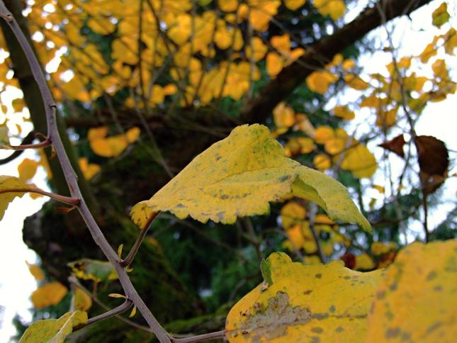 na jeseň sú najkrajšie stromy
