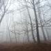 hmla v lese