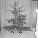 náš vianocny stromček