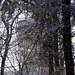 koliba v snehu, sen o veži
