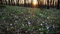 Biely koberec - Považský Inovec