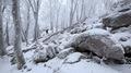 Záruby, Malé Karpaty, Zima 2018